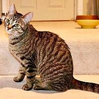 Adopt A Pet :: Starfire - Lindsay, ON