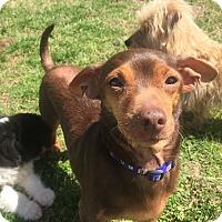 Adopt A Pet :: Dude (ETAA) - Washington, DC