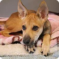 Adopt A Pet :: 'MUSHROOM' - Agoura Hills, CA