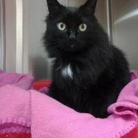 Adopt A Pet :: Precious - Lufkin, TX