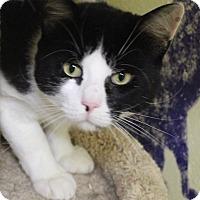 Adopt A Pet :: Churchill - Middletown, CT