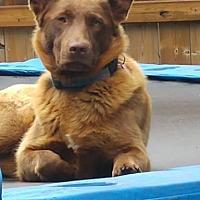 Adopt A Pet :: MOCA - Oakbank, MB