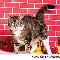 Adopt A Pet :: Miss Kitty - Reno, NV