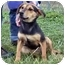 Photo 1 - Shepherd (Unknown Type)/Hound (Unknown Type) Mix Puppy for adoption in Osseo, Minnesota - Katie