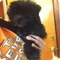 Adopt A Pet :: Darth Vader - Shawnee Mission, KS
