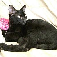 Adopt A Pet :: Man O'War - Sacramento, CA