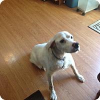 Adopt A Pet :: Sarco - Brick, NJ