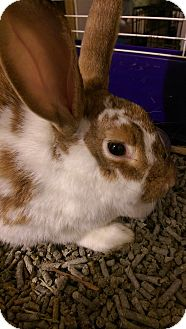 Other/Unknown Mix for adoption in Ogden, Utah - Lili