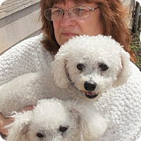 Adopt A Pet :: Birdie - Plain City, OH