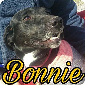 Labrador Retriever Mix Dog for adoption in Union City, Tennessee - Bonnie