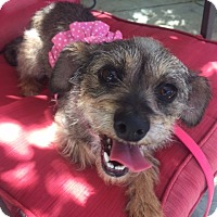 Adopt A Pet :: Baby - Vacaville, CA