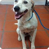Adopt A Pet :: Apollo - Laredo, TX