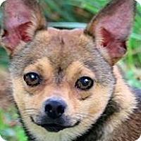 Adopt A Pet :: TIMMY(YOUR TINY BEST FRIEND!! - Wakefield, RI