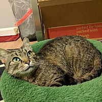 Adopt A Pet :: Jilly - Concord, NC