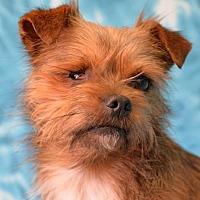 Adopt A Pet :: Sedona - Eureka, CA