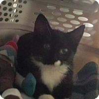 Adopt A Pet :: Kevianne - Freeport, NY