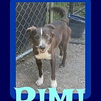 Adopt A Pet :: RIMI - Allentown, PA