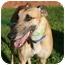 "Photo 3 - Greyhound Dog for adoption in Smyrna, Tennessee - WTD On My Way ""Way'"