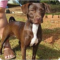 Adopt A Pet :: Pebbles - Conyers, GA