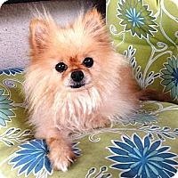 Adopt A Pet :: Ralphie - Escondido, CA