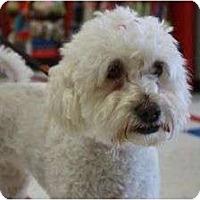Adopt A Pet :: Wendy - Arlington, TX
