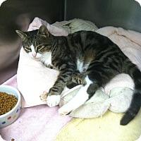 Adopt A Pet :: Quinn - New Egypt, NJ