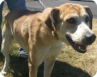 Hound (Unknown Type)/Shepherd (Unknown Type) Mix Dog for adoption in The Dalles, Oregon - Anya