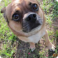 Adopt A Pet :: Buddy - Jacksonville, FL