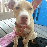 Adopt A Pet :: Mickey - Lowell, IN