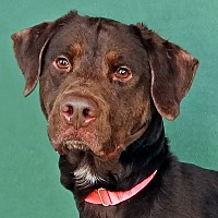 Adopt A Pet :: Nero - Renfrew, PA