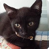 Adopt A Pet :: BooBoo - Orange, CA