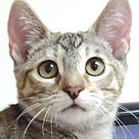 Adopt A Pet :: Dora - Westlake Village, CA