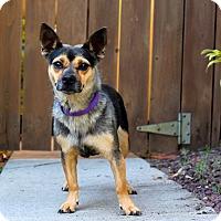 Adopt A Pet :: Flip Flop - Los Angeles, CA