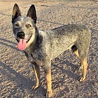 Adopt A Pet :: Rouge - San Tan Valley, AZ