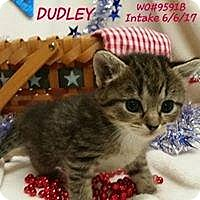 Adopt A Pet :: Dudley - Fayetteville, WV