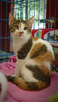 Calico Kitten for adoption in Alpharetta, Georgia - JellyBean