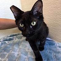 Adopt A Pet :: Pez - Las Vegas, NV