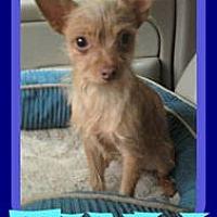 Adopt A Pet :: TINY - Halifax, NS