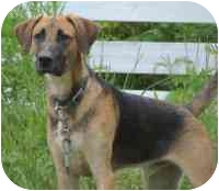 Coonhound (Unknown Type) Mix Dog for adoption in Coleraine, Minnesota - Mason