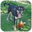 Photo 2 - Labrador Retriever Mix Puppy for adoption in San Clemente, California - ZACK