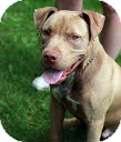 Terrier (Unknown Type, Medium) Mix Dog for adoption in Tinton Falls, New Jersey - Arnold