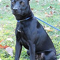 Adopt A Pet :: Opie - Courtesy Post - Cincinnati, OH