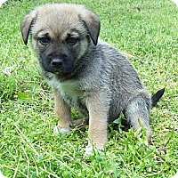 Adopt A Pet :: Jackson - Chattanooga, TN