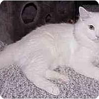 Adopt A Pet :: Jasper (with 'Sox') - Portland, OR