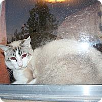 Adopt A Pet :: Matteo - Santa Rosa, CA