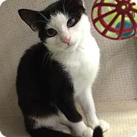 Adopt A Pet :: Zack - New York, NY