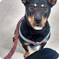 Adopt A Pet :: Emily - Jacksboro, TN
