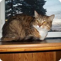 Adopt A Pet :: Maliki - Acme, PA