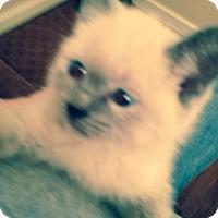 Adopt A Pet :: Demi - Harriman, NY