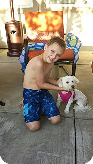Maltese/Poodle (Standard) Mix Dog for adoption in Rancho Cucamonga, California - Molly